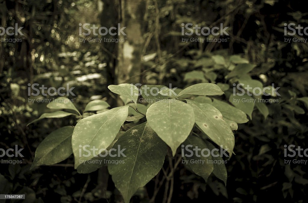 forest scene and leaves royalty-free stock photo