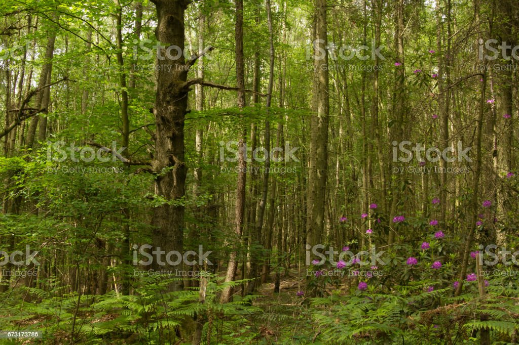Forest Scene stock photo