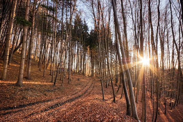 Forest Scenic – Foto