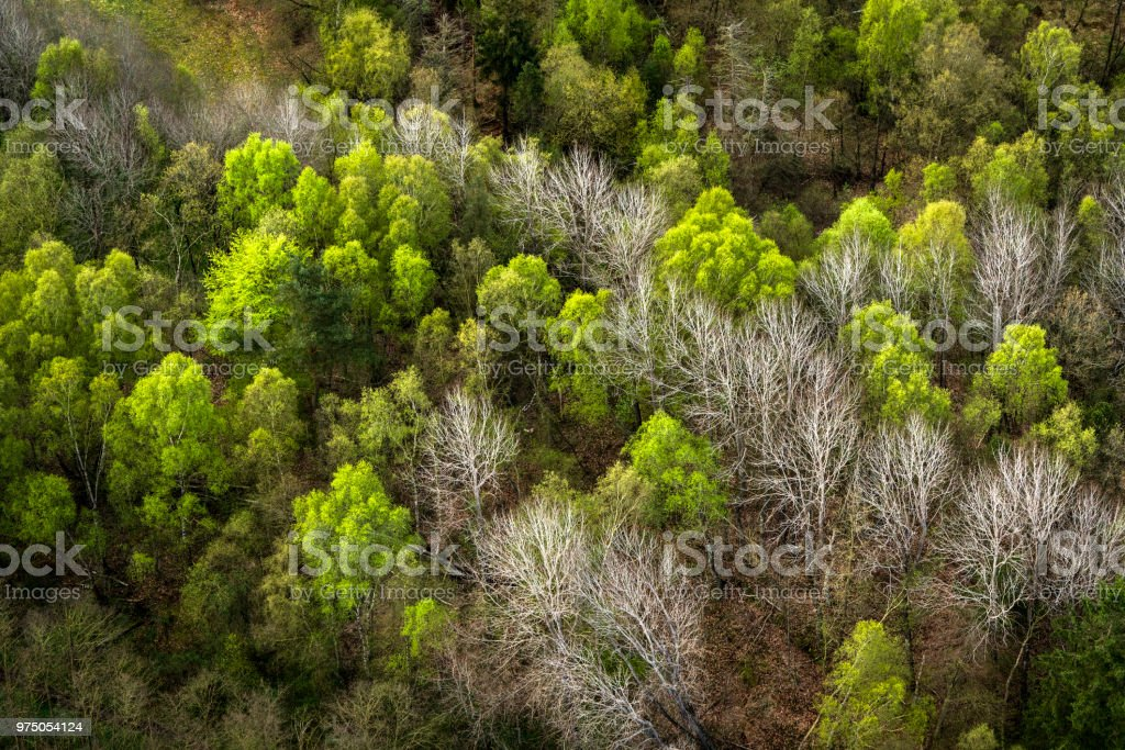 Forest seen from above with green and white trees stock photo