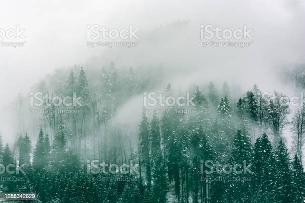 Photo of Forest shrouded by fog in winter