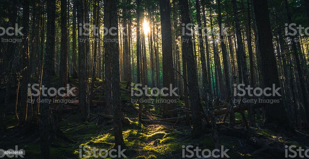 Forest silhouetted by a sunset. - foto de stock