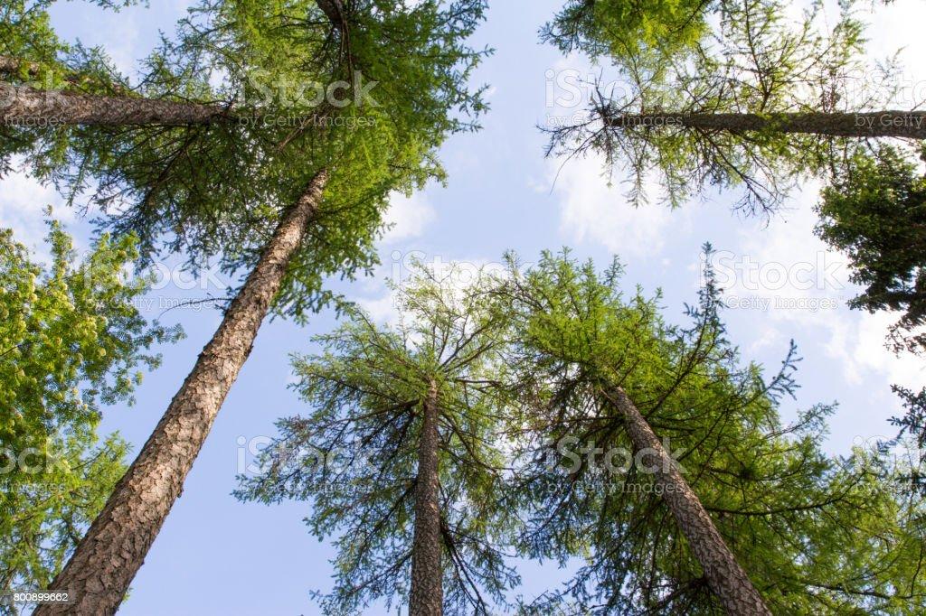 Bosque sky - foto de stock