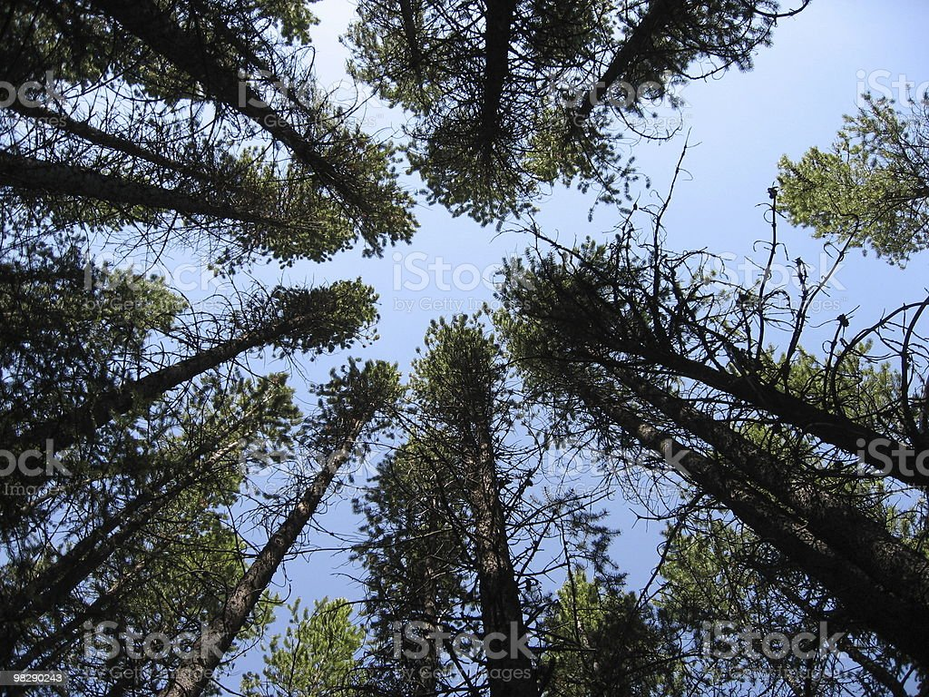 Foresta cielo foto stock royalty-free