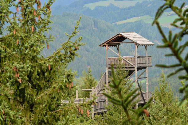 wald-skywalk in wipfelwanderweg rachau in österreich - baumwipfelpfad stock-fotos und bilder