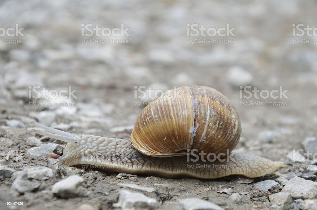 forest snail stock photo