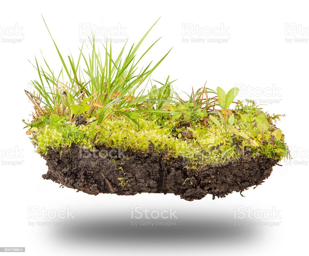 forest soil on white stock photo