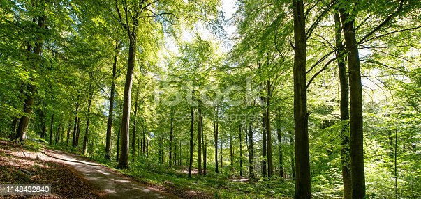 istock forest spring color 1148432840