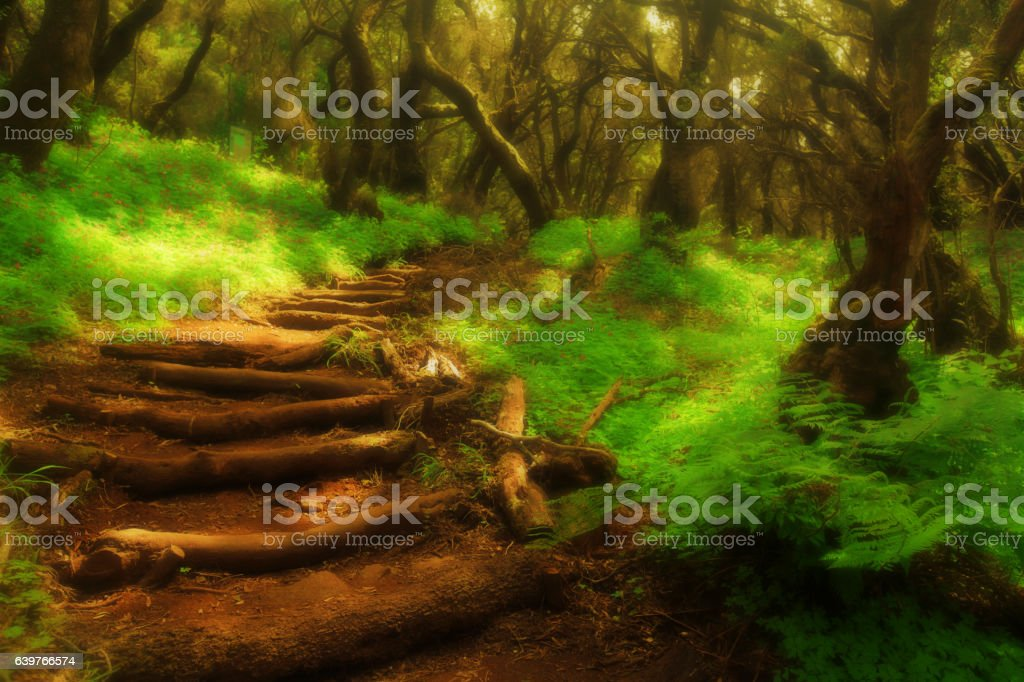 Forest stairs in a Garajonay national park stock photo