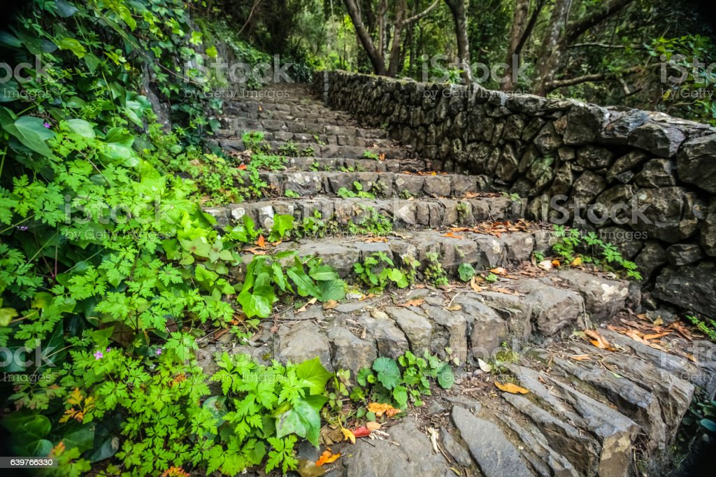 Forest stairs in the rainforest in Garajonay national park stock photo