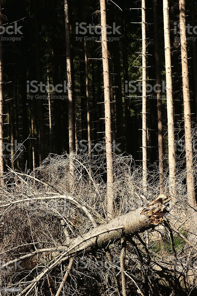 forest storm1 royalty-free stock photo