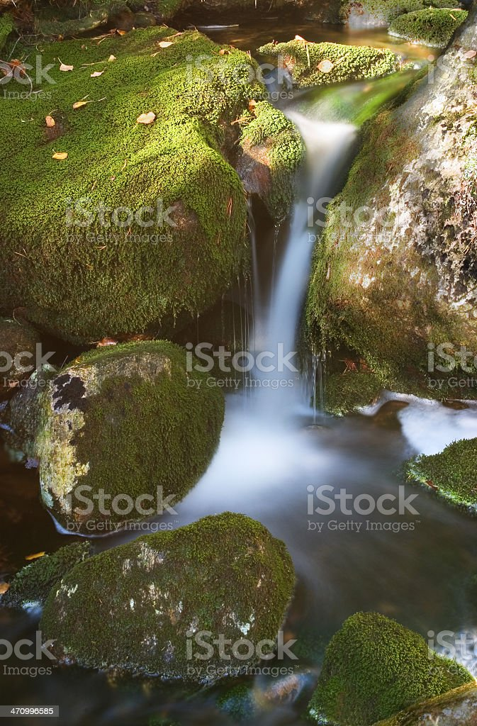 Wald-stream – Foto