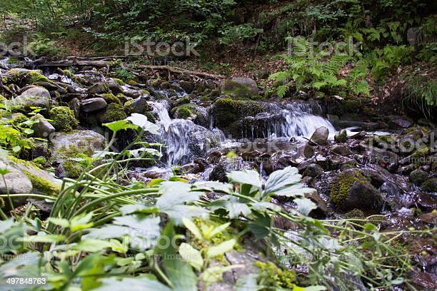 Photo of Forest stream.