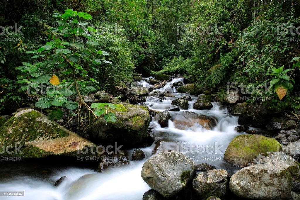 Forest Stream bildbanksfoto