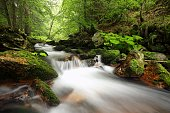 Forest stream flowing down from the mountains