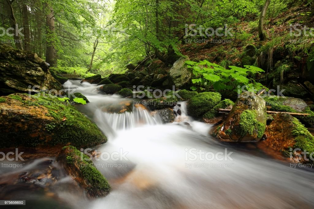 Arroyo del bosque - foto de stock