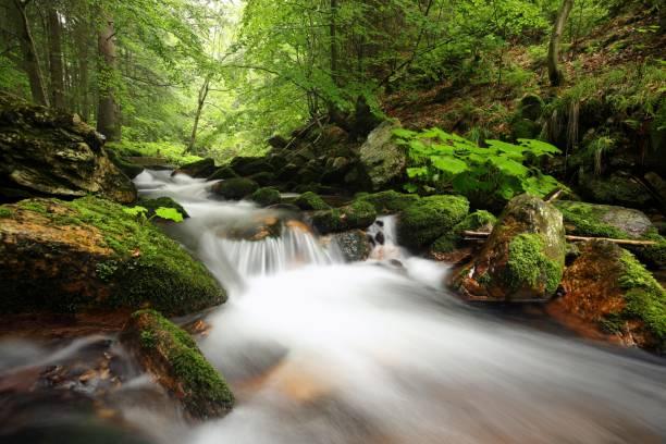 ruisseau de forêt - arbre à feuilles caduques photos et images de collection