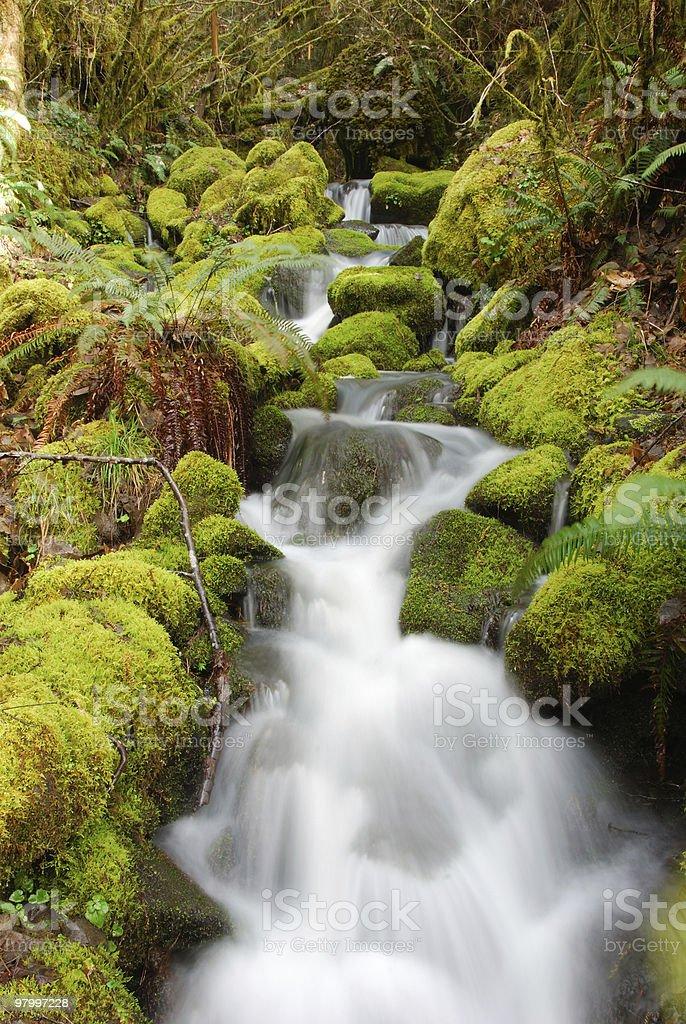 forest stream royalty free stockfoto