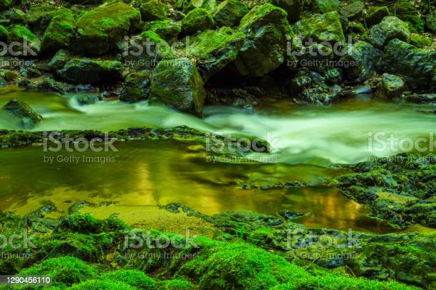 Photo of Forest stream running over mossy rocks