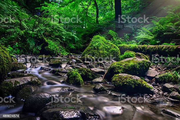 Photo of Forest stream running over mossy rocks.