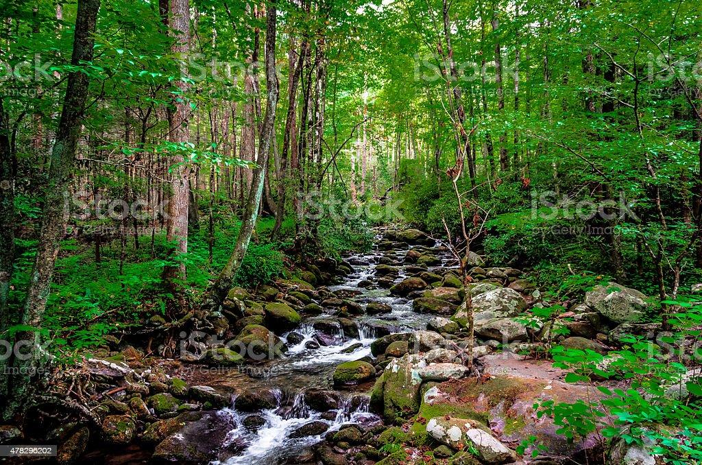 Forest stream runs through rocks stock photo