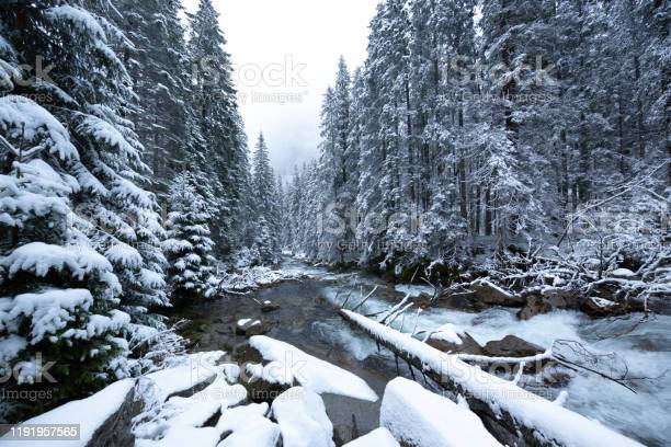 Photo of Forest, Stream, Winter, Tatra Mountains