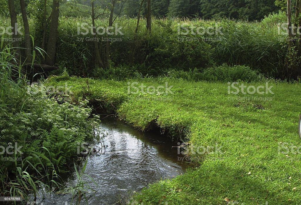 Forest Streamlet royalty-free stock photo