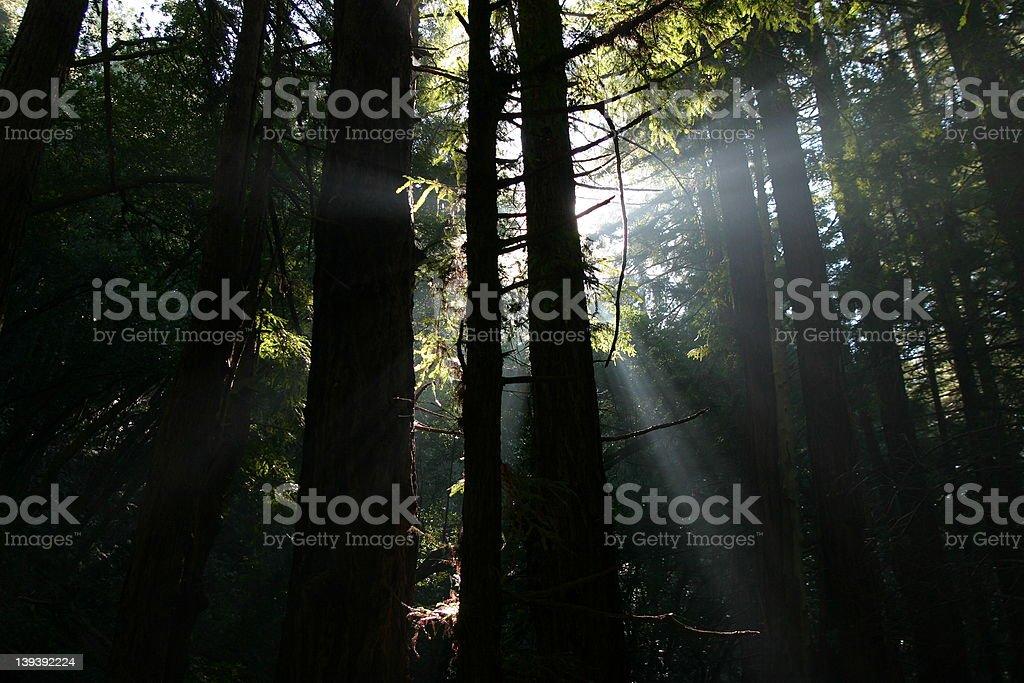 Forest Sun Peak royalty-free stock photo