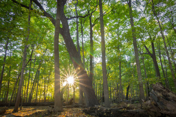 amanecer del bosque - illinois fotografías e imágenes de stock