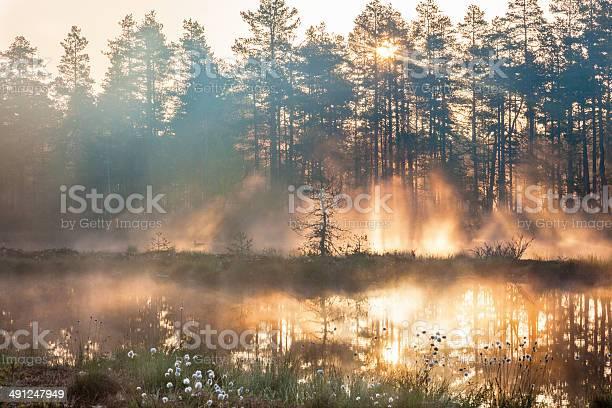 Photo of Forest sunrise