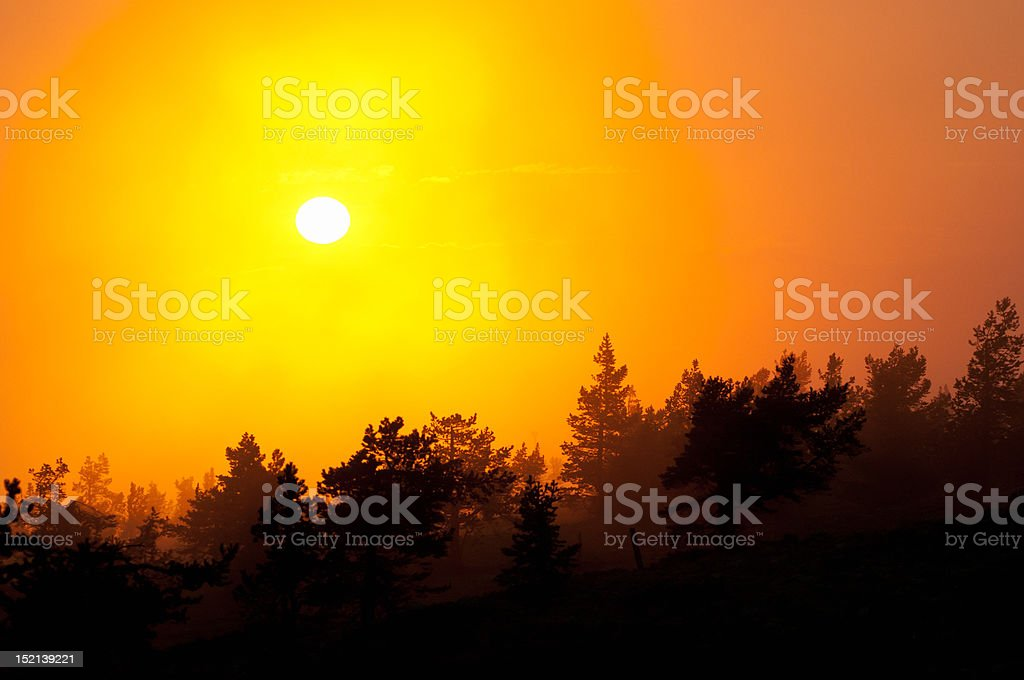 Forest sunset stock photo