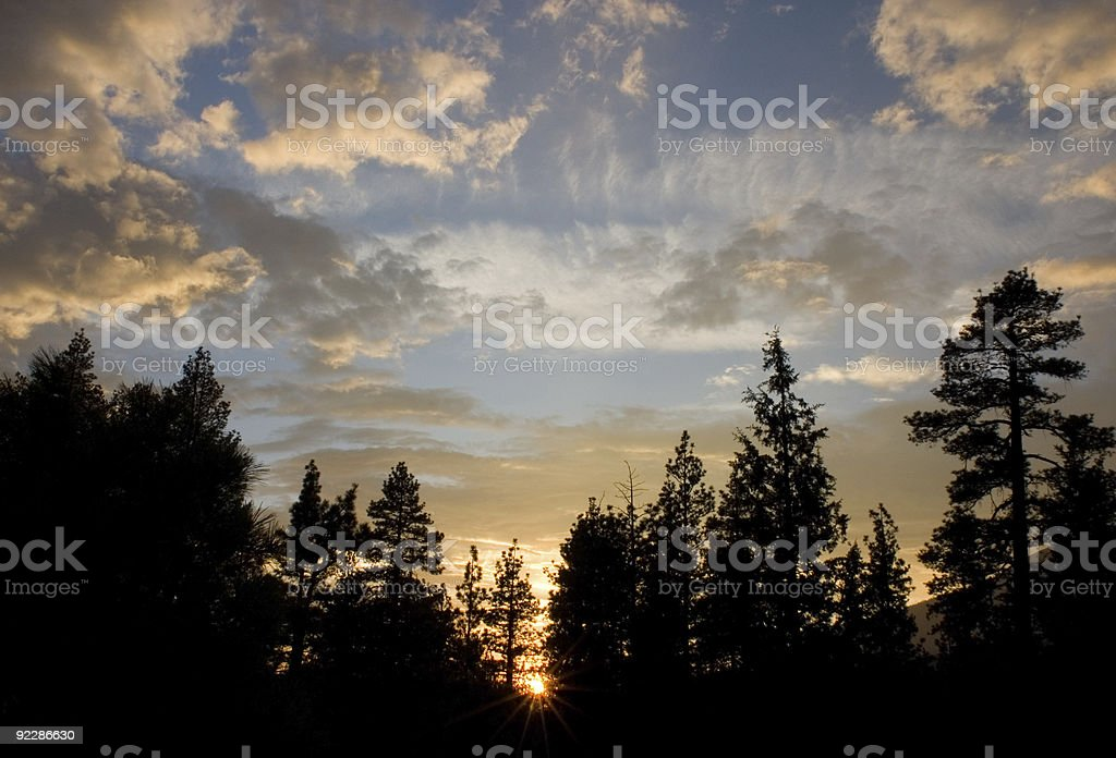 Forest Sunset royalty-free stock photo