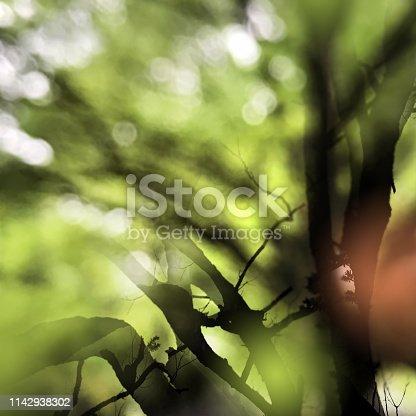 Scene of trees take multiple exposure with beautiful defocused light in spring