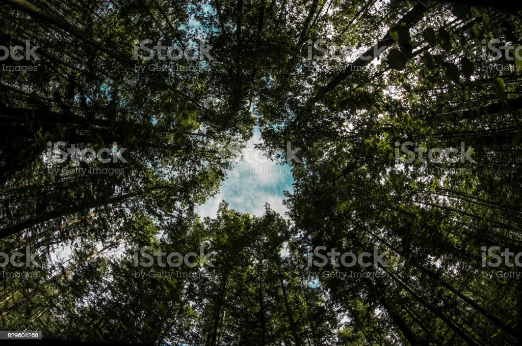 Forest thicket stock photo