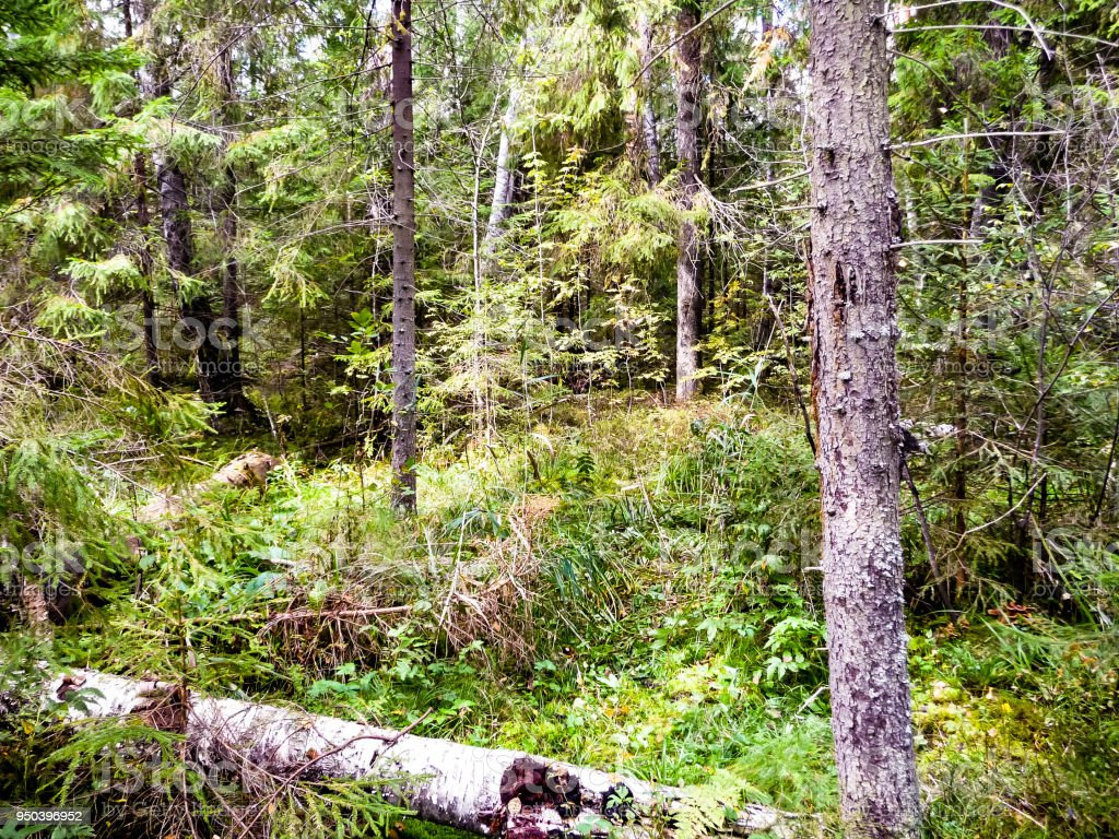 Forest thickets stock photo