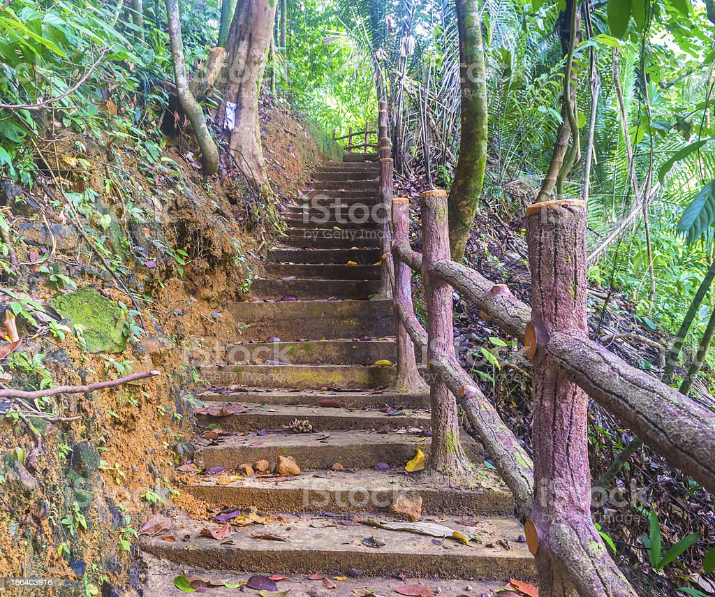 Forest track and stairway royalty-free stock photo