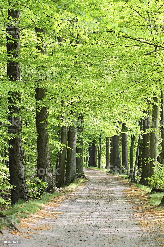Forest track in spring royalty-free stock photo