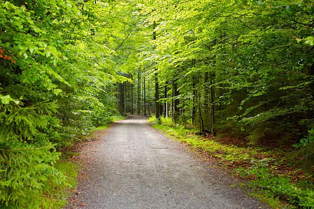 De Forest - Photo
