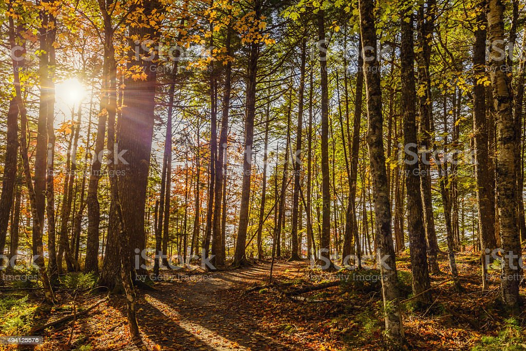 Forest Trail in Fall stock photo