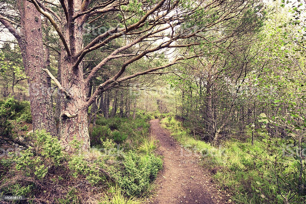 Forest Trail in the Cairngorm Mountains Scotland royalty-free stock photo