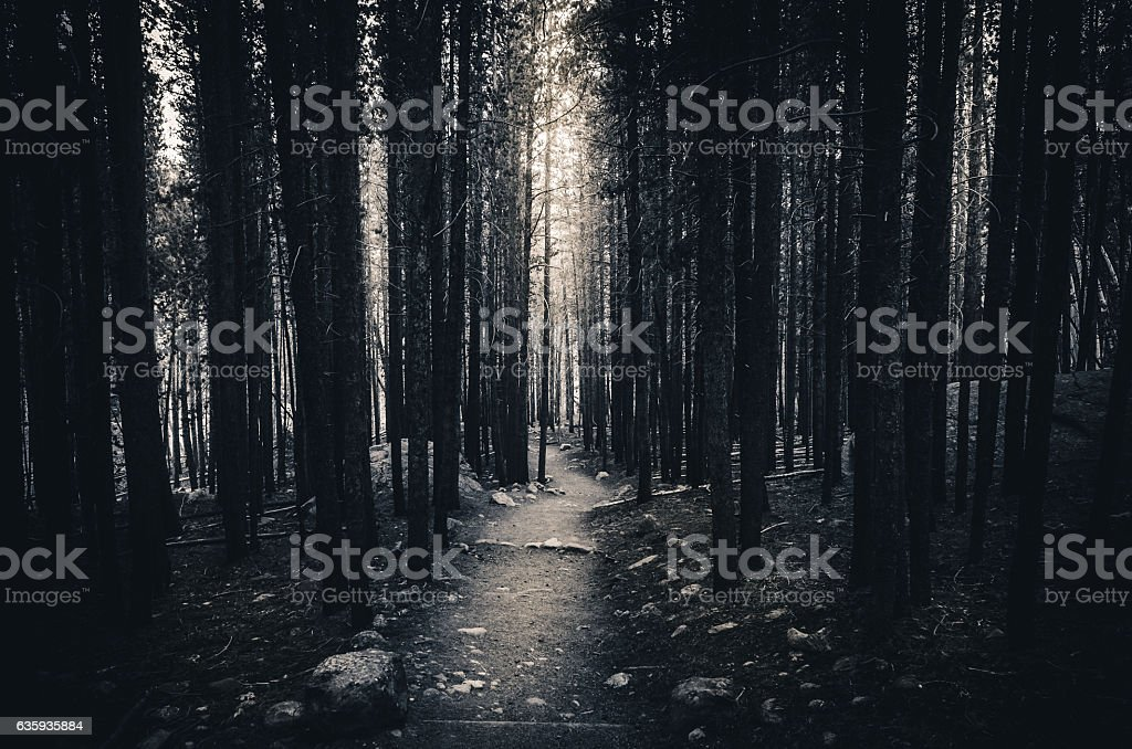 Forest trail leading to sunlight. Black and white. - foto de stock