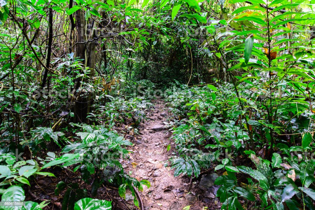 Forest trail pathway for running in national park. royalty-free 스톡 사진