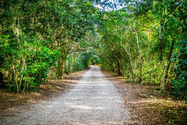 A forest trail with the sun shining through the foliage in Avery Island, Louisiana stock photo