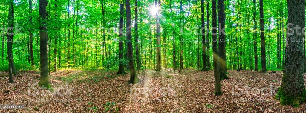 Panorama del árbol de bosque con rayos de sol - foto de stock