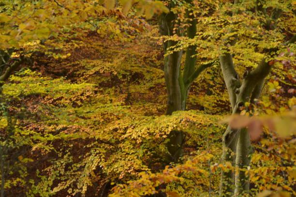 skogsträd under hösten - bernkastel kues höst bildbanksfoton och bilder