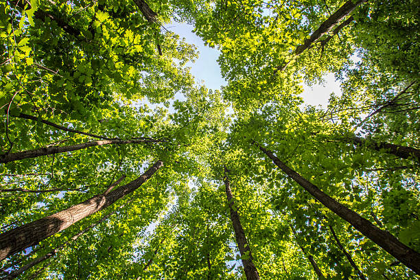 Forest trees from bellow - Photo