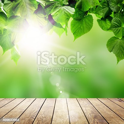 istock forest trees leaf. 469600664