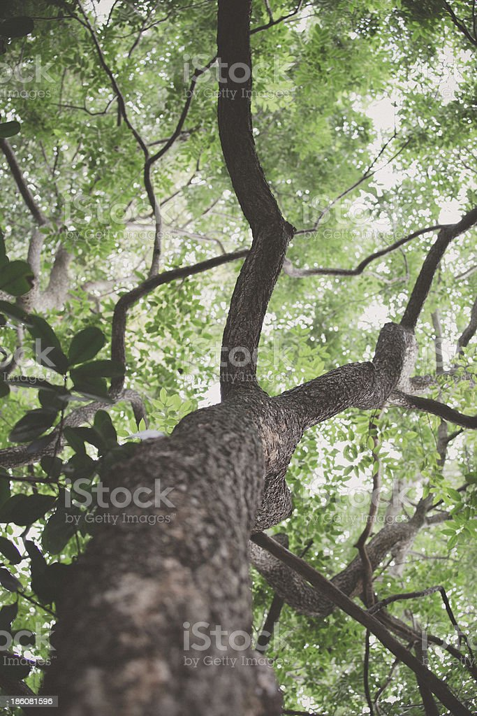 forest trees. nature green wood royalty-free stock photo