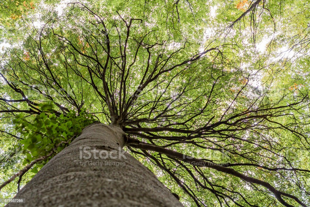 forest trees. nature green wood sunlight backgrounds. royalty-free stock photo