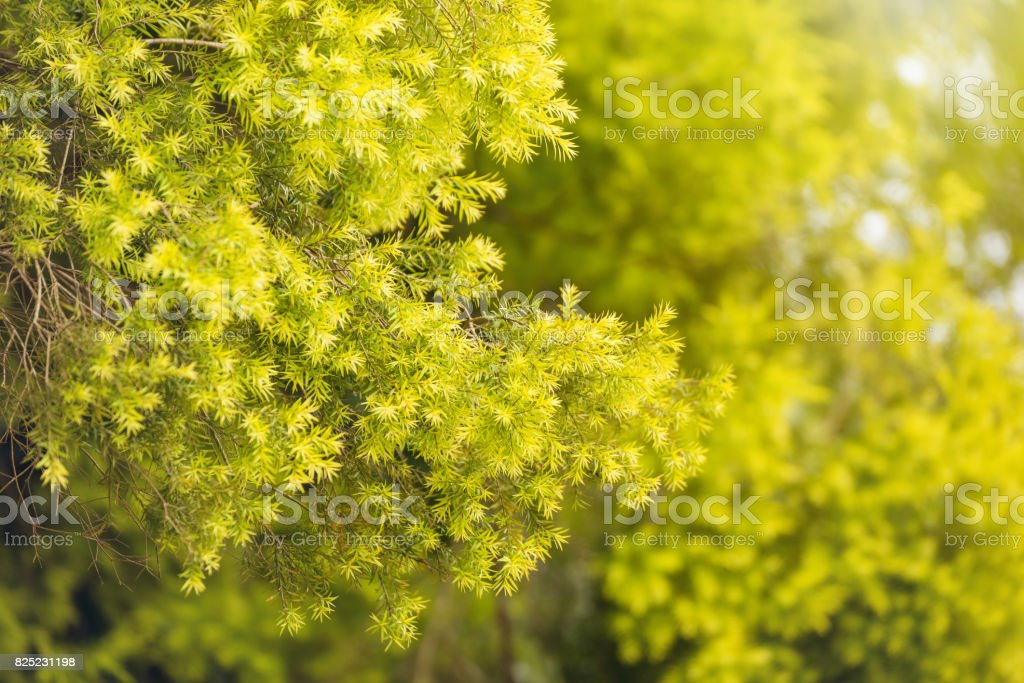 outdoor backgrounds. Forest, Trees, Nature Parks Outdoor Backgrounds And Textures In Thailand.  Royalty-free
